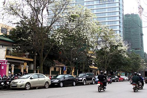 Dịch vụ taxi tải uy tín tại phố Nguyễn Chánh